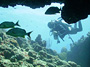 Beginning Scuba Diving Courses